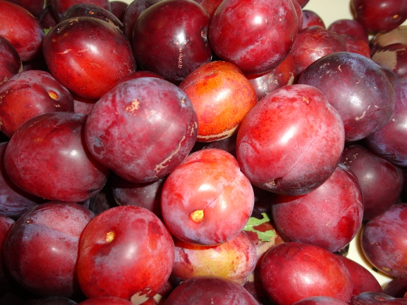 Peter and Fi's Plum Harvest